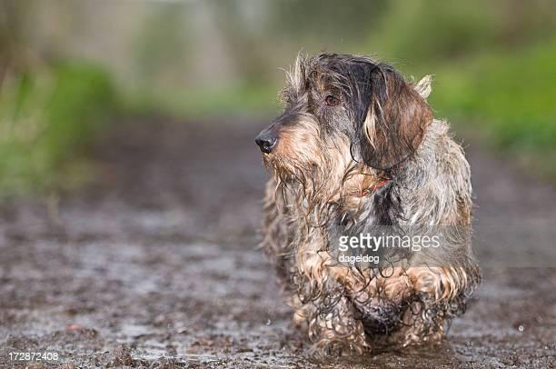the muddy walk
