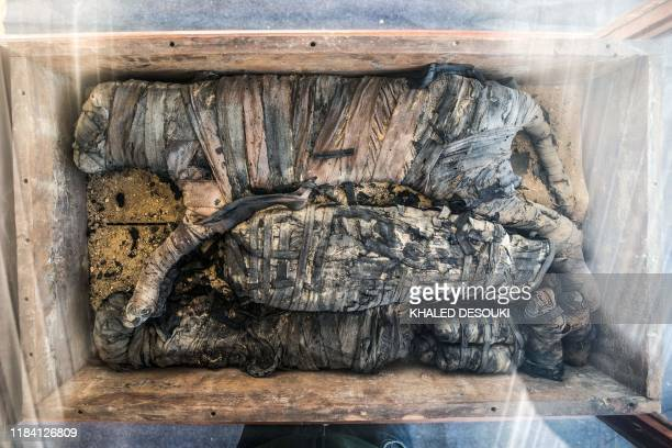 The mummy of a cat is displayed after the announcement of a new discovery carried out by an Egyptian archaeological team in Giza's Saqqara necropolis...