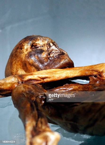 The mummy of an iceman named Otzi discovered on 1991 in the Italian Schnal Valley glacier is displayed at the Archaeological Museum of Bolzano on...