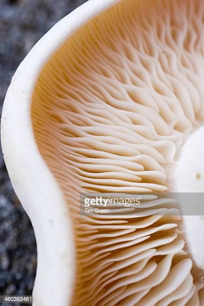 The mushroom effect