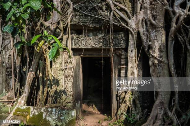 the mystery entrance to ta prohm temple in siem reap, cambodia. - khmer art stock photos and pictures