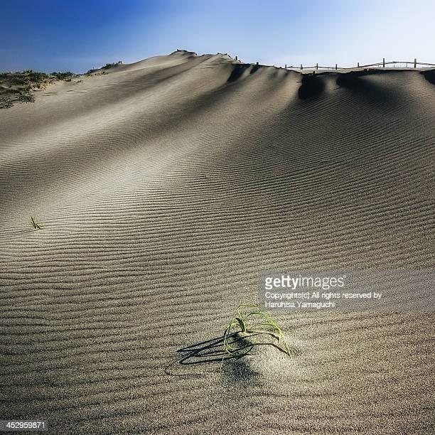 The Nakatajima Dune