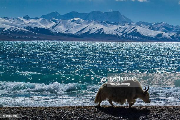 The Nam Lake of Tibet