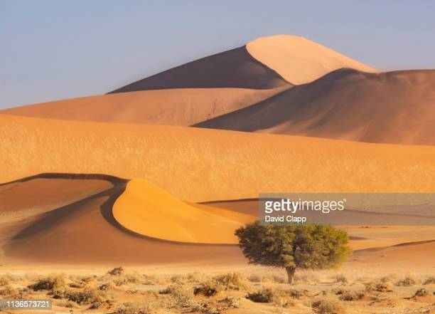 the namib desert sand dunes, sossusvlei, namibia, africa - namibia stock pictures, royalty-free photos & images