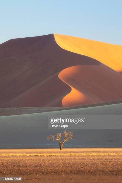 the namib desert sand dunes, sossusvlei, namibia, africa - セスリエム ストックフォトと画像