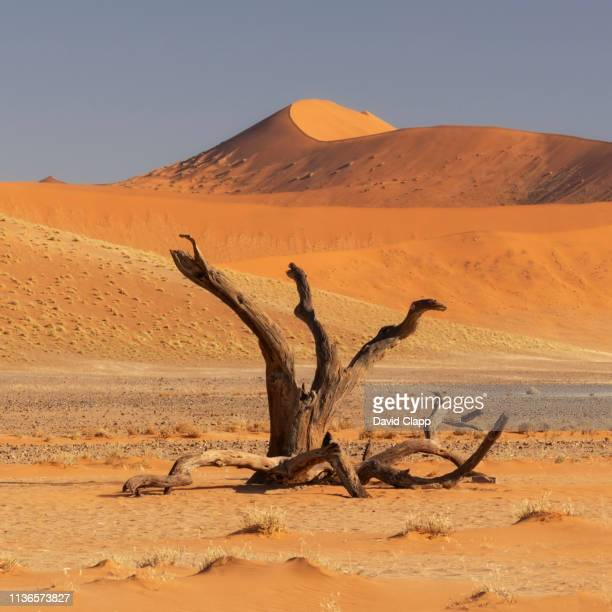 the namib desert sand dunes, sossusvlei, namibia, africa - namib naukluft national park stock pictures, royalty-free photos & images
