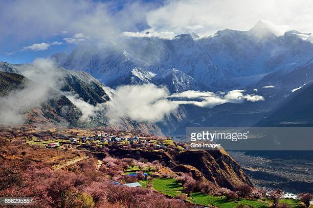 the namjagbarwascenic area - peach blossom stock pictures, royalty-free photos & images