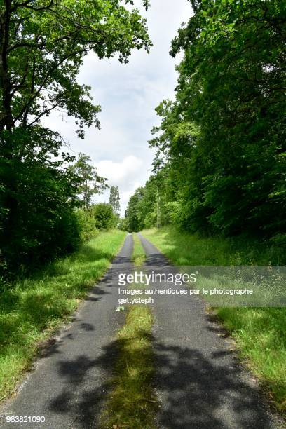 The narrow asphalt road with vegetation on his middle trough tree area