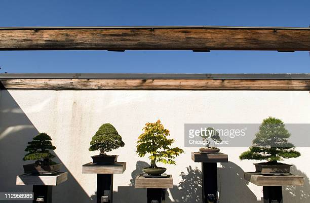 The National Bonsai Penjing Museum at the National Arboretum in Washington DC