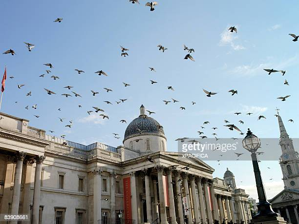 the national gallery in london, england. - national portrait gallery london stock pictures, royalty-free photos & images