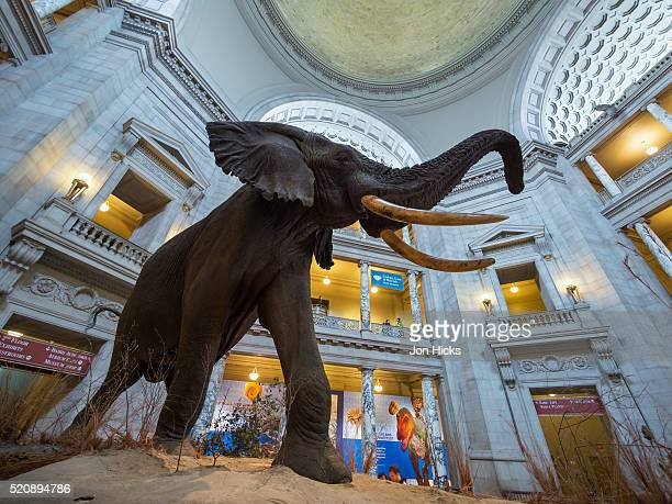 the national museum of natural history in washington, dc. - smithsonian institution stock pictures, royalty-free photos & images