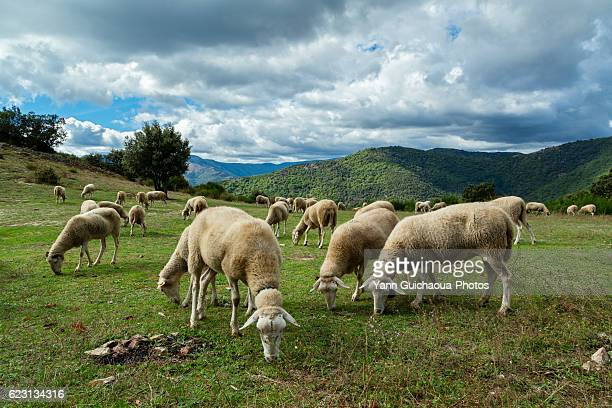 the national park of cevennes, languedoc roussillon, france - ガール県 ストックフォトと画像