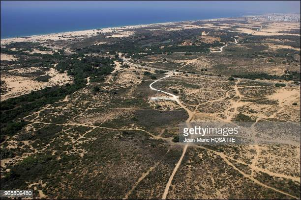 The national park of nitzanim dunes in the Negev, between Ashkelon and Ashdod. Formed some 1000 years ago, the dunes were entirely covered with sand...