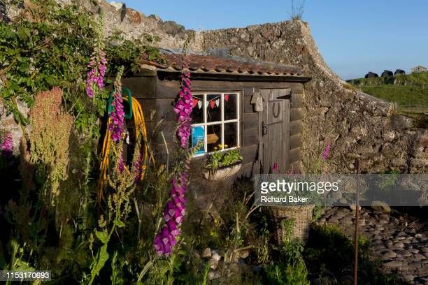The National Trust's Gertrude Jekyll walled garden on Holy Island on 27th June 2019 on Lindisfarne Island Northumberland England The Holy Island of...