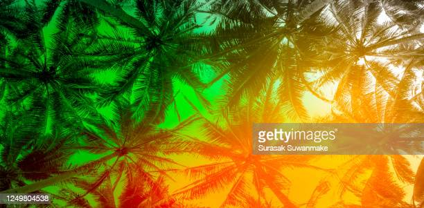 the natural background of palm leaves in a tropical forest. - pazifikinseln stock-fotos und bilder