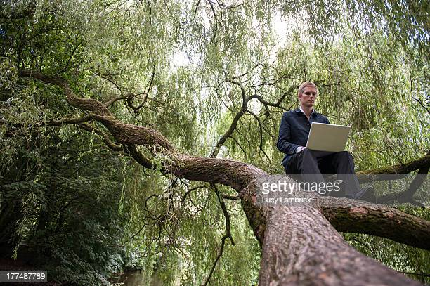 The natural tree office