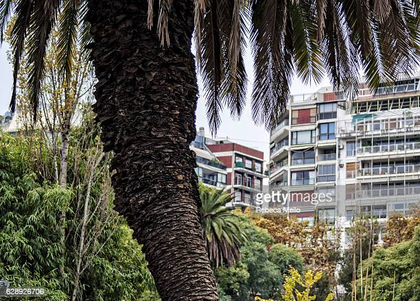 the nature inside the city - palermo buenos aires stock photos and pictures