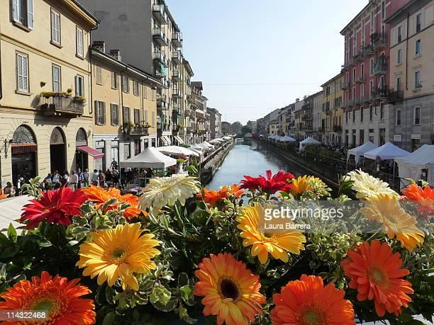 the navigli flower market in milan - navigli milano foto e immagini stock