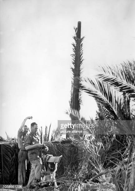 The Nazi propaganda picture shows a heavy antiaircraft gun of the German Wehrmacht in Tunisia The photo was issued in January 1943 Photo Berliner...