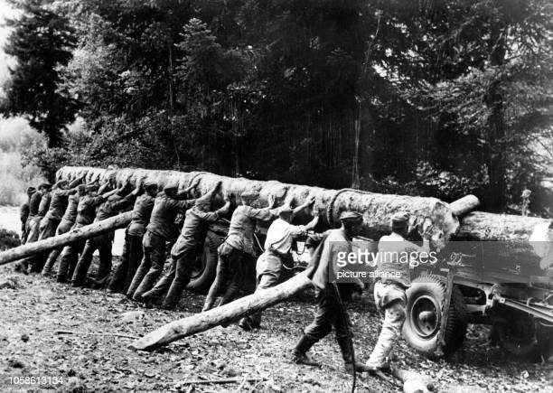 The Nazi propaganda picture shows the loading of tree trunks for the construction of a bridge in the Caucasus by the Todt Organisation in November...