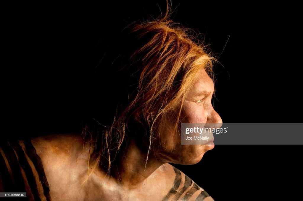 Neanderthal Female : News Photo
