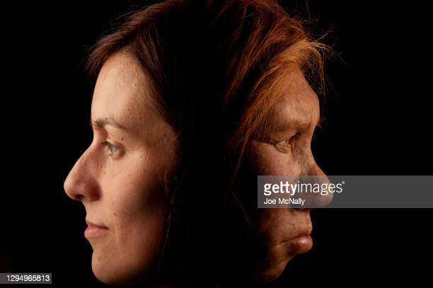 The Neanderthal woman was re-created and built by Dutch artists Andrie and Alfons Kennis. They used replicas of a pelvis and cranial anatomy from...