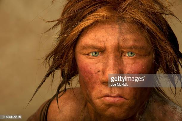 The Neanderthal woman was re-created and built by Dutch artists Andrie and Alfons Kennis. Research including fossil anatomy and a detailed study of...