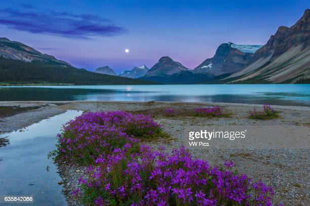 The nearly Full Moon rising at the end of Bow Lake with purple flowers in the foreground Taken August 9 2014 This is an HDR High Dynamic Range stack...