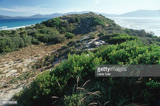 The Neck at Bruny Island Separated by a narrow stretch of vegetated land Bruny Island joins the mainland The strip is a penguin rookery protected by...
