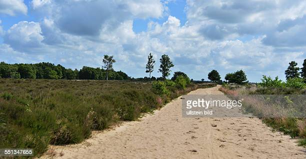 The Netherlands, Assen: In the north of the Netherlands, the area around Drenthe has a diverse nature, here is also the heath and moorland...