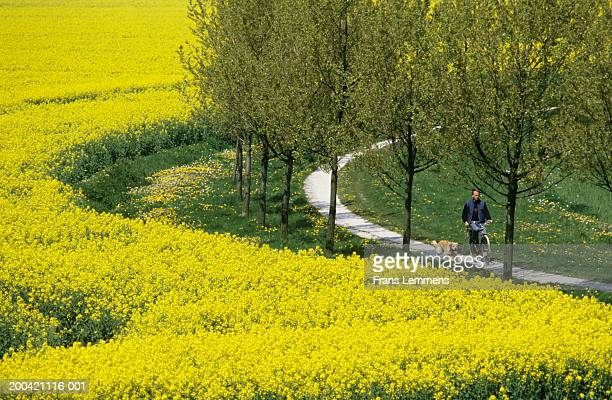 The Netherlands, Flevoland,  man cycling in countryside with dog
