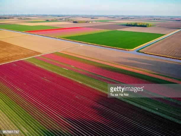 the netherlands pretty tulip fields seen from above - flevoland stockfoto's en -beelden