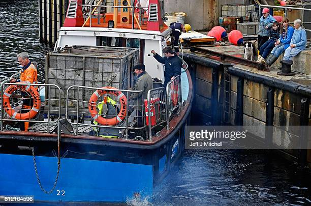 The New Advance ferry manned by residents leaves the harbour on the Island of Foula to take the Grear family ponies to a sale on Shetland on October...