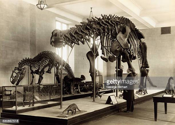 The new Dinosuar Hall at the American Museum of Natural History was opened to the public recently It is said to contain the finest collection of...