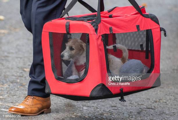 The new Downing Street dog, Dilyn, arrives at number 10 on September 2, 2019 in London, England. British Prime Minister Boris Johnson has threatened...