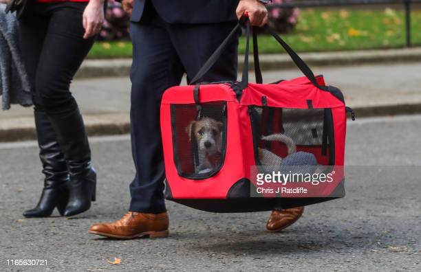 The new Downing Street dog Dilyn arrives at number 10 on September 2 2019 in London England British Prime Minister Boris Johnson has threatened to...
