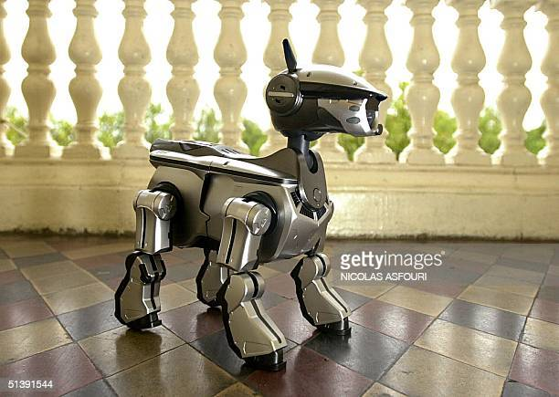 The new Sony dog robot called AIBO 220 is launched 08 November 2001 in London for the European market The pet robot the fourth version of AIBO series...