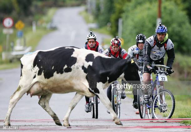 The New Zealand team of Balance Vector Richard Usher Kristina Anglem Marcel Hagener and Nathan Fa'avae wait for a cow to cross the road on the third...