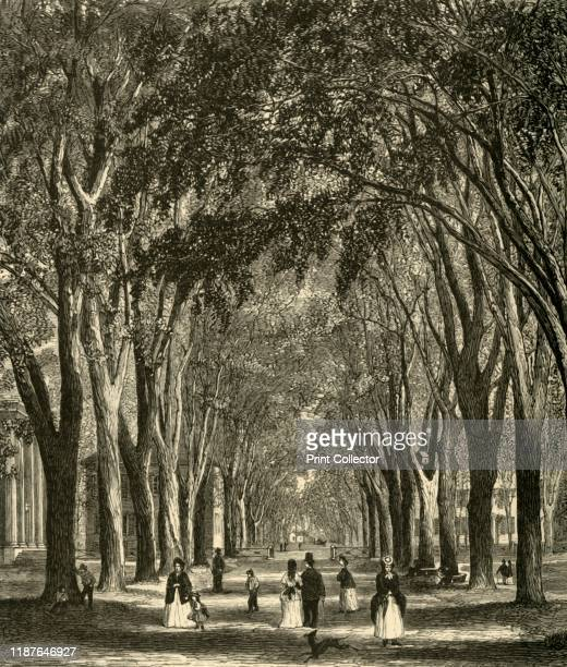 The NewHaven Elms' 1874 People walking in the shade of Elm Arcade Temple Street New Haven Connecticut USA By the early 1900s American elms which are...