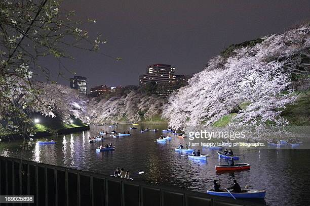 The night view of cherry blossoms
