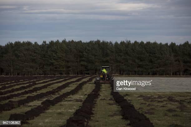 The North Doddinton site is prepared for tree planting on March 21 2018 in Doddington England The Doddington North Afforestation project has begun...