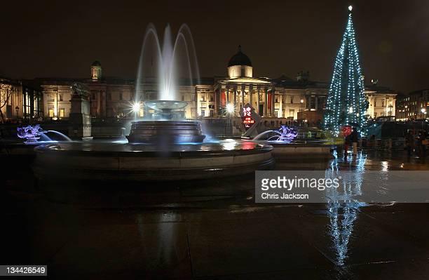 The Norwegian Christmas tree lights up Trafalgar Square on December 1 2011 in London England The Trafalgar Square Christmas Tree is the City of...