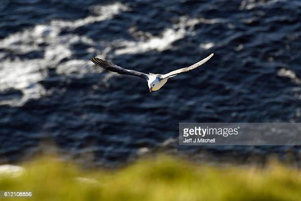 The Noup on the Island of Foula on October 2 2016 in Foula Scotland Foula is the remotest inhabited island in Great Britain with a current population...