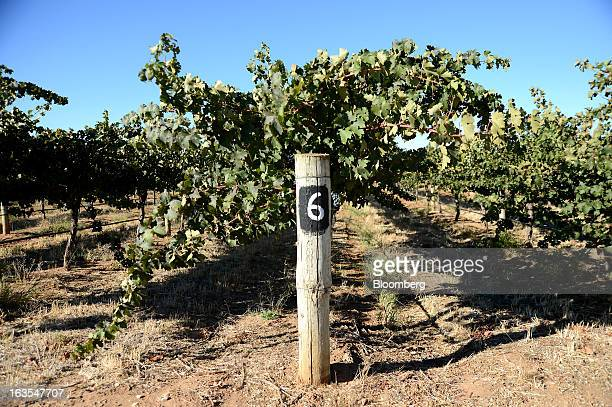 The number '6' marks a row of vines at Treasury Wine Estates Ltd's Wolf Blass vineyards in the Barossa Valley Australia on Monday March 4 2013...
