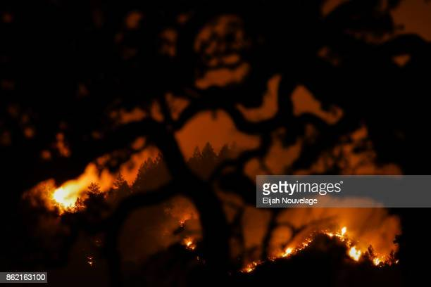 The Nuns Fire is seen on a hillside through the branches of a tree on Oct. 16, 2017 in Kenwood, California. At least 40 people are confirmed dead,...