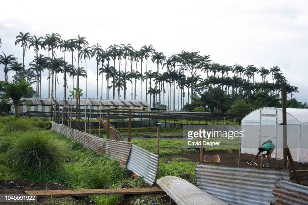 The nursery of Sampaka Farm on August 08 2018 in Malabo Equatorial Guinea Since Equatorial Guinea transitioned to a petroleum producer agriculture...