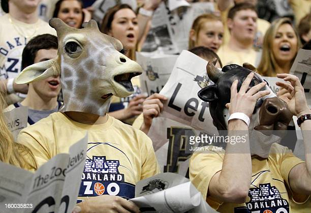 The Oakland Zoo stands during the game between the Pittsburgh Panthers and the Connecticut Huskies at Petersen Events Center on January 19, 2013 in...