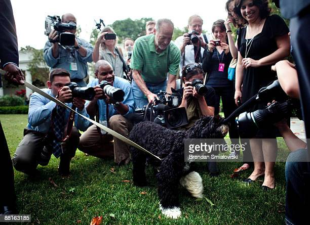 The Obama family dog Bo bites a television camera's microphone in the Rose Garden of the White House during US President Barack Obama's departure to...