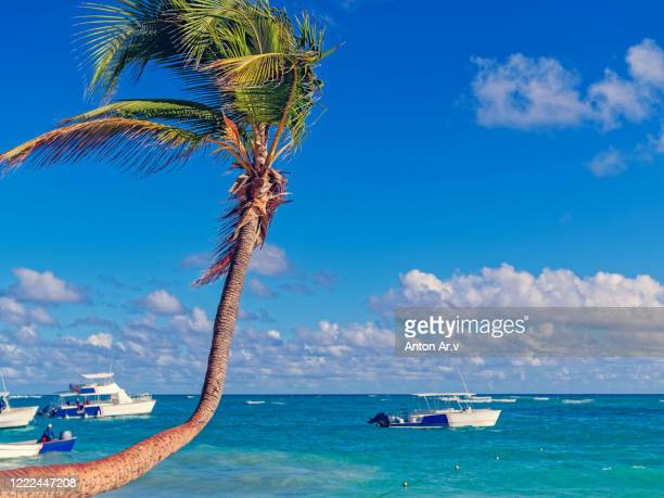 beautiful tropical scene with palm trees
