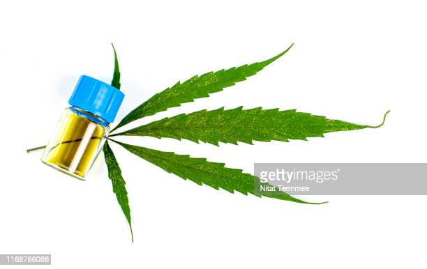 the oil obtained from the extraction of cannabis leaves. on white background. - marijuana leaf stock pictures, royalty-free photos & images